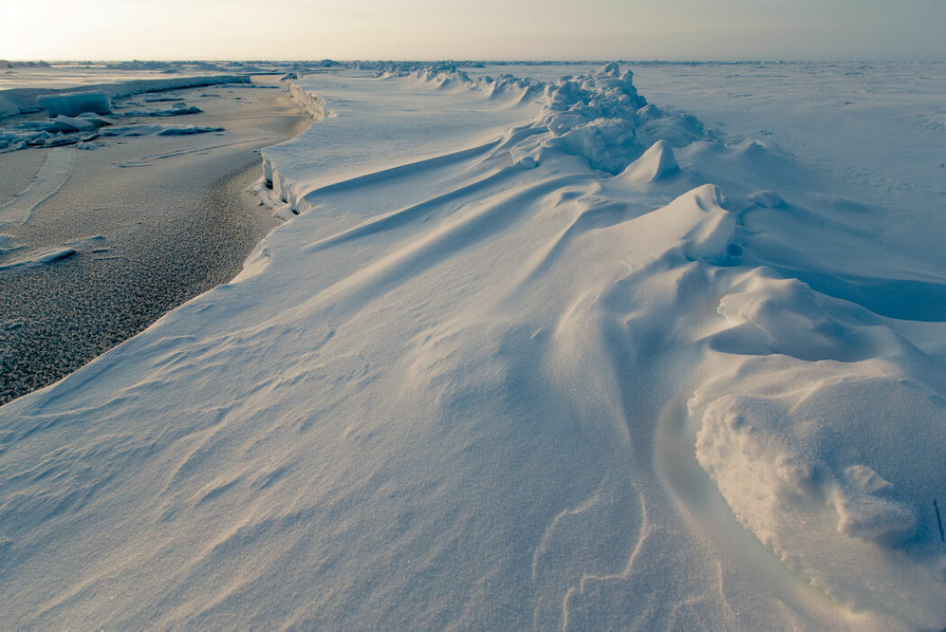 SKRUGARDER Betydningen til skrugarder, i takt med smeltende havis, skal studeres nærmere under MOSAiC-ekspedisjonen. Dette bildet av skrugarder er tatt under N-ICE-ekspedisjonen i 2015.