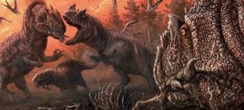 Var allosaurene kannibaler?