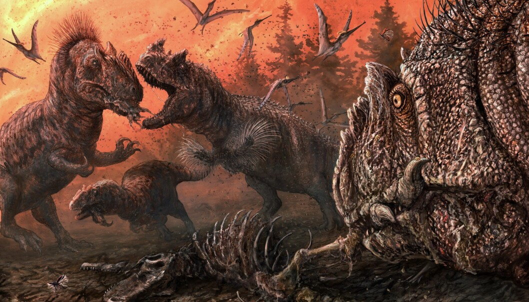 Rov-dinosaurer som allosaurer kan ha spist hverandre, tror forskere.