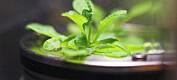 Nye norske planter på romstasjonen