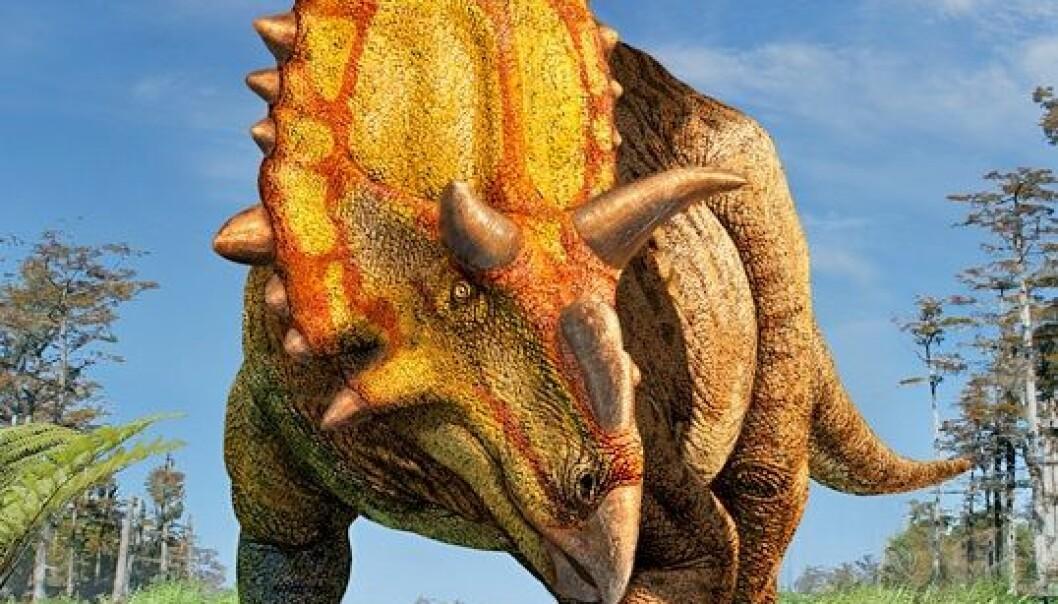 Slik ser en illustratør for seg at Xenoceratops foremostensis ville sett ut om du kom ansikt til ansikt med den i skogen. Formen er nok ganske riktig, mens fargene nok står for kunstnerens egen regning. (Bilde: Julius Csotonyi)
