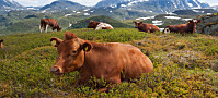 Kan vi leve på kortreist mat i Norge?