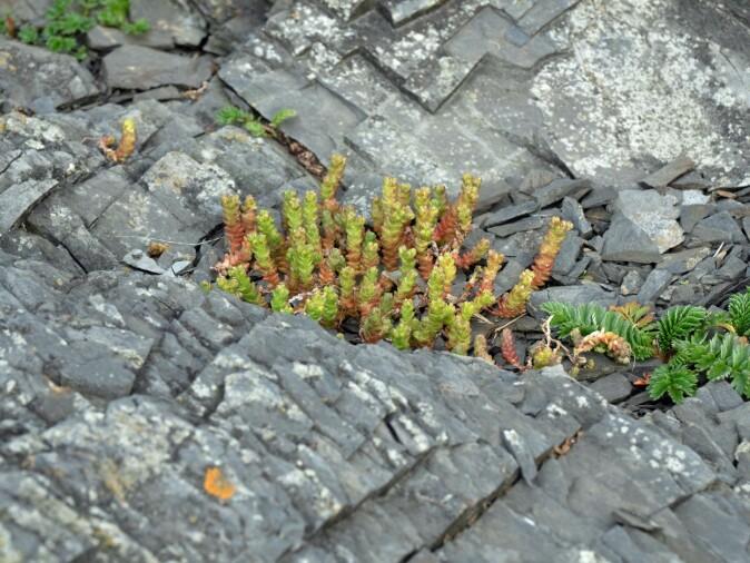 På land er det mose og andre planter som bruker sprekker og hulrom. Under vann er det blant annet rur og blåskjell.