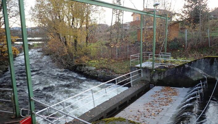 Fiskefella i Imsa er del av Norsk institutt for naturforskning sin forskningsstasjon. Den fangar all opp- og nedvandrande fisk.