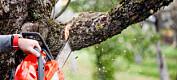 Ny dom kan bremse nabokrangler om trær