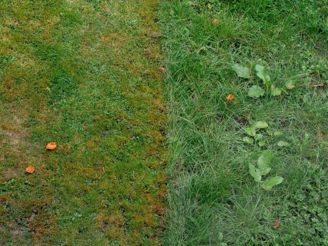 Kjenner du en ubendig trang til å klippe gresset til høyre, selv om det er på naboens tomt? Da er du kanskje blant dem som drar statistikken på nabotvister opp her til lands.
