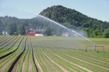 Gulrotdyrking i Lågendalen, Larvik kommune. Med vanning gir disse arealene store og årvisse gode avlinger. (Foto: Ragnhild Sperstad / Skog og landskap)