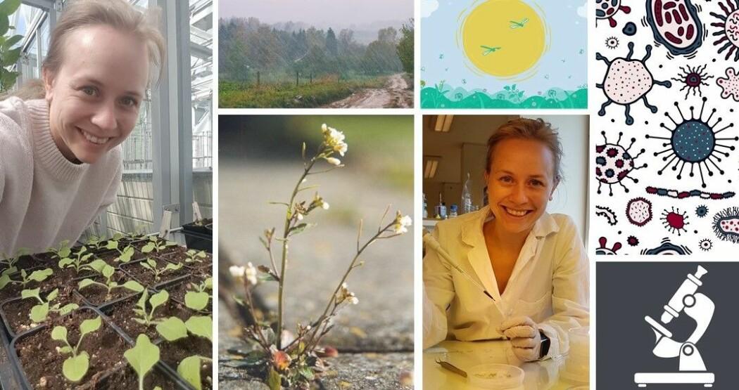 Vilde Olsson forsker på hvordan planter forsvarer seg. Og særlig vårskrinneblom (nummer to fra venstre), for den er lett å forske på.