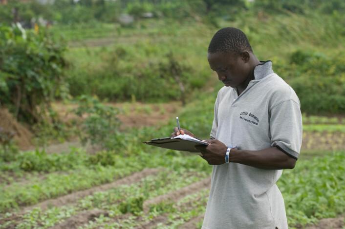 Doktorgradsstudenten Ghislain T. Tepa-Yotto på feltarbeid i Benin. (Foto: Arnstein Staverløkk)