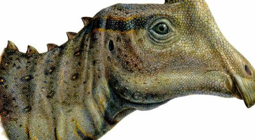 Fant fossil av dinosaurunge på tur med skoleklassen