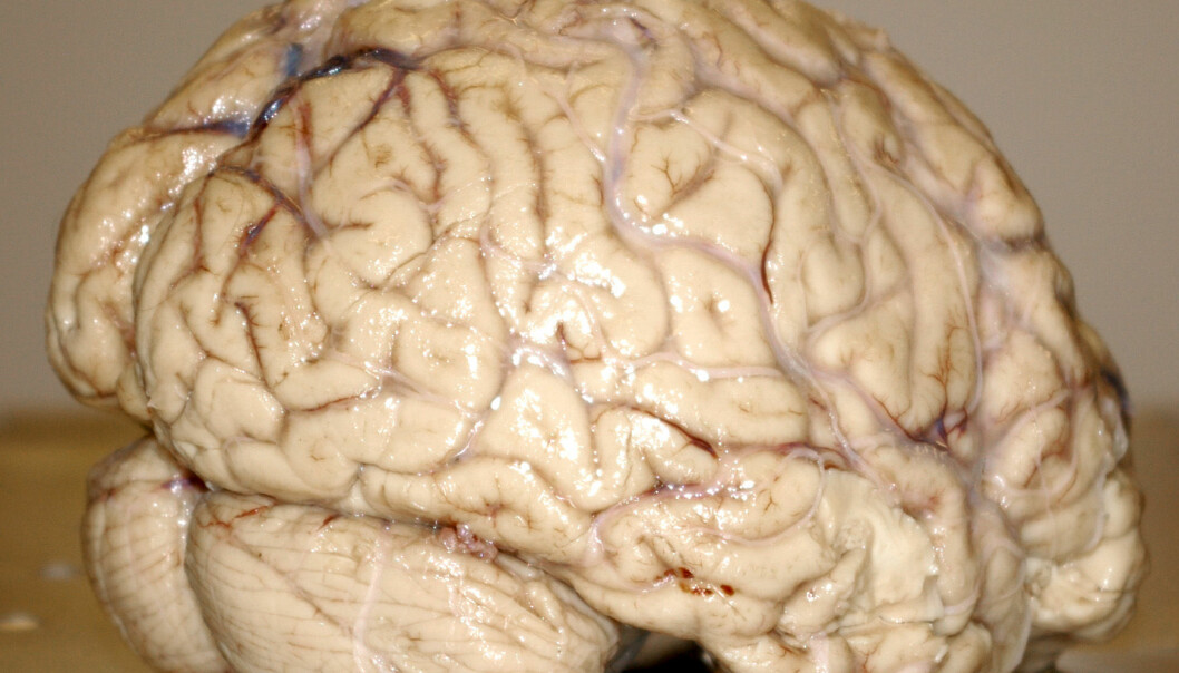 Fikse hjertet i hjernen