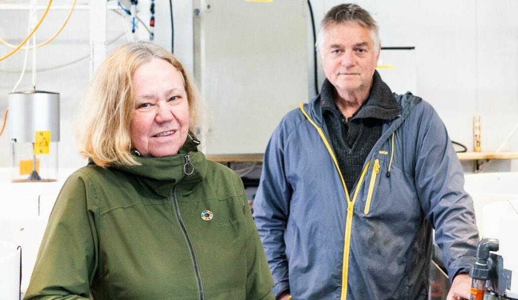 Birgitta Nordberg og Anders Mangor-Jensen skal forsøke å oppdrette rødspette. Det har ikke blitt gjort på Havforskningsinstituttet siden andre verdenskrig.
