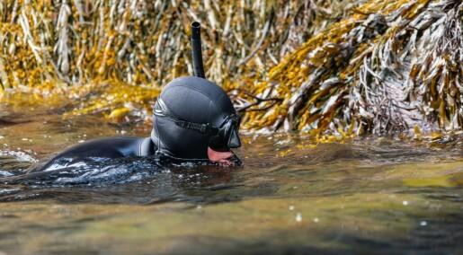 Tore svømmer store deler av Hardangerfjorden for å kartlegge blåskjell