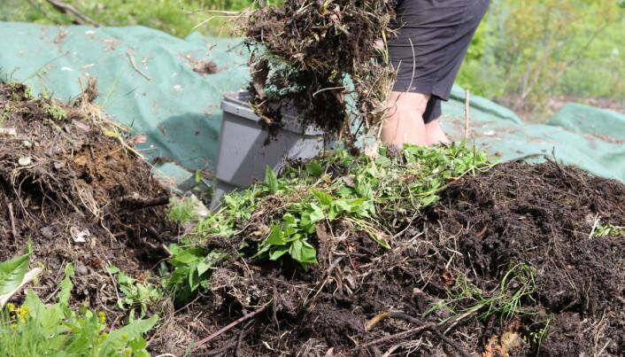 Det grønnes legges i lag med det brune. Matrestene legges i midten, slik at det ikke blir så fristene for dyr.