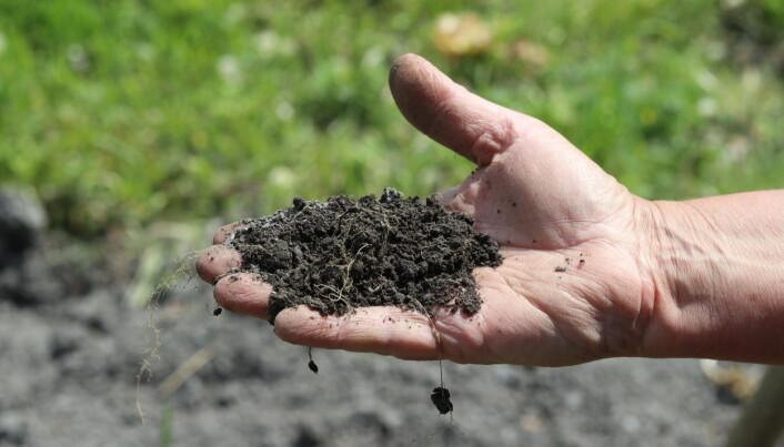 Kompost er veldig positivt for strukturen i jorda, sier Jolly.