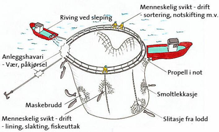 Tegningen viser typiske årsaker til rømming, spesielt fokusert mot hull i not og operasjoner på not. (Foto: (Tegning: Mats A. Heide, SINTEF Fiskeri og havbruk AS))