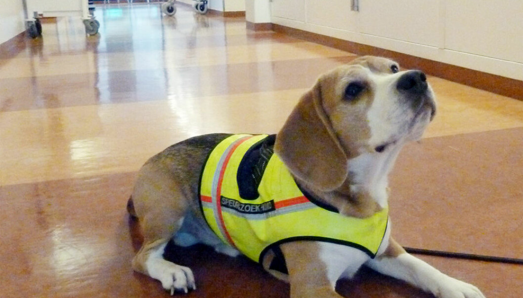 Første hund som finner skumle bakterier