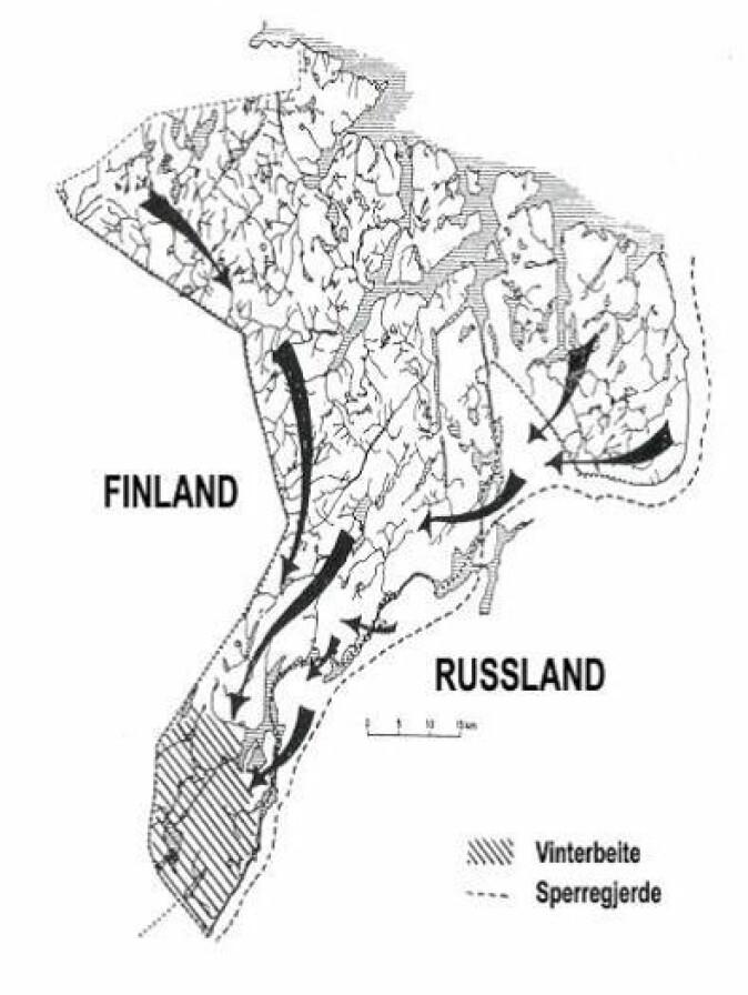Elgens trekkmønster i Sør-Varanger sent på høsten. Kartet er basert på sporobservasjoner.