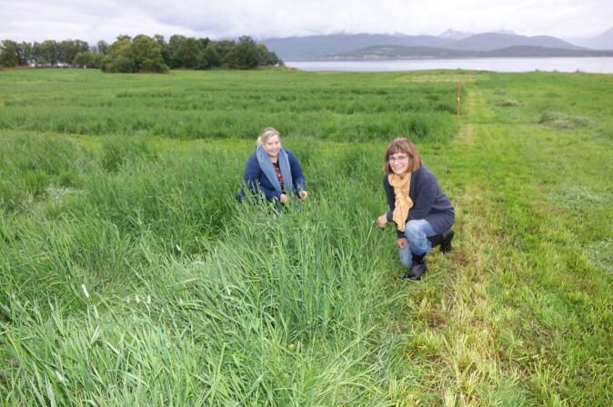 NIBIO-forskerne Sigridur Dalmannsdottir og Marit Jørgensen ved feltene på Holt høsten 2019.
