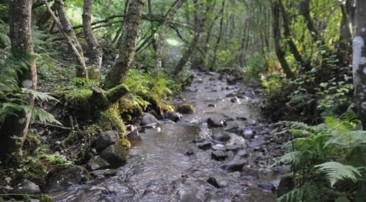 Forskning på bærekraftig forvaltning av sjøørretbekker