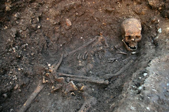 Levningen etter kong Richard III av England. Kongen ble begravd i Leichester i august 1485. (Foto: University of Leicester)