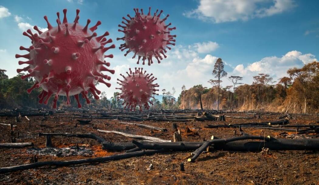 Ødeleggelsen av naturlige habitater for ville dyr øker risikoen for at sykdommer hopper til mennesker i framtiden, advarer en gruppe danske forskere.