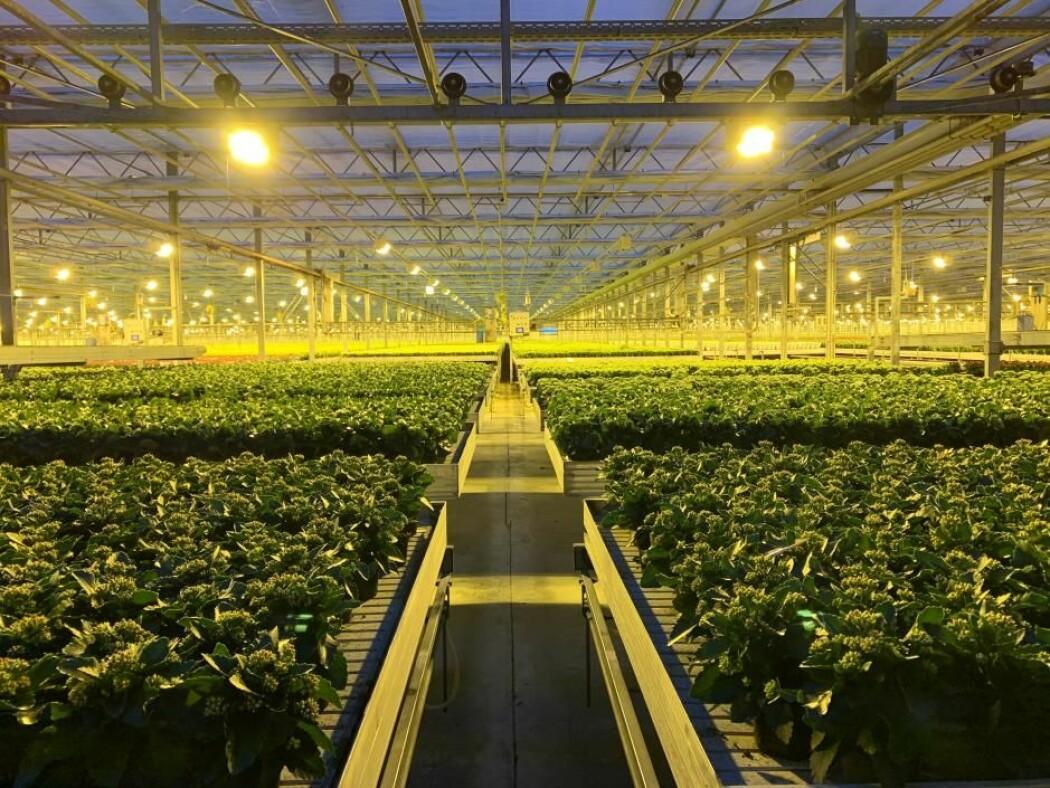 Gartneriet Queen er en stor blomsterprodusent og bruker bakterier i driften. En metode som kan revolusjonere landbruket.