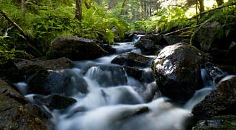 - Å stanse kalking kan føre til en forsuring av bekker i populært skogsområde, mener forskere