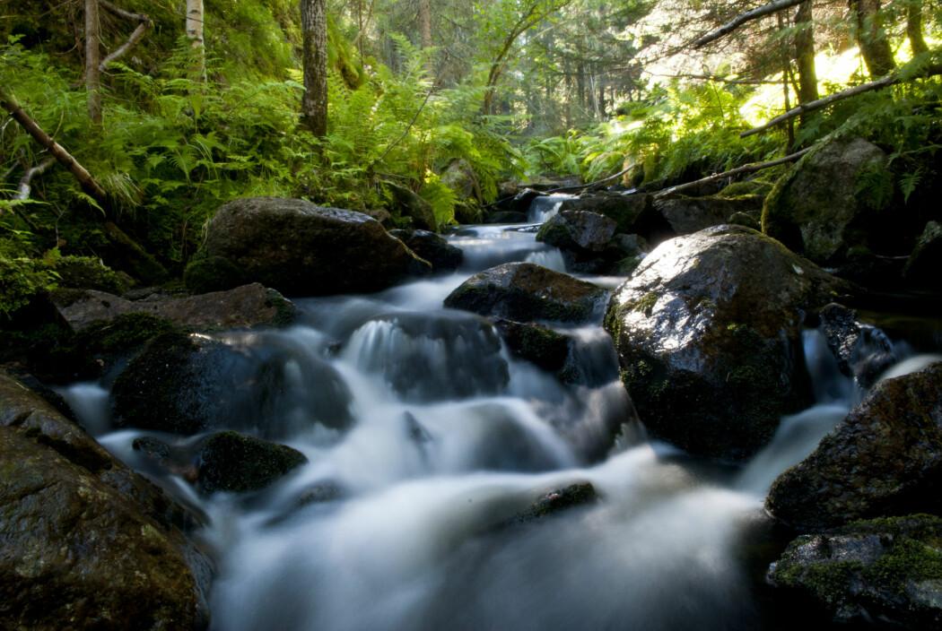 I samarbeid med Norges Jeger- og Fiskerforbund har forskere undersøkt den økologiske tilstanden i ti bekker i Romeriksåsene nordøst for Oslo.