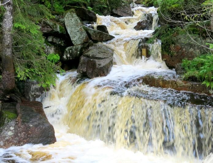 Den økologiske tilstanden i bekkene er dårlig, noe som mest sannsynlig skyldes episoder med surt smeltevann om våren.