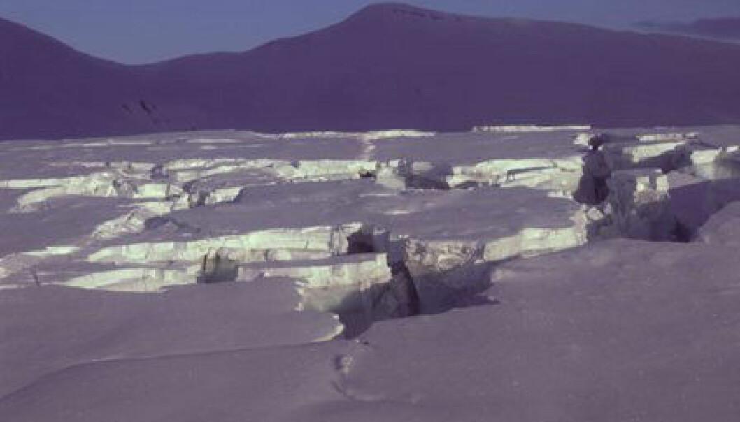 """""""Fridtjovbreen på Svalbard surget på 1990-tallet, som gjorde at breen sprakk voldsomt opp og ble ufarbar"""""""