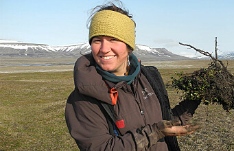 A tiny arctic shrub reveals secrets of plant growth on Svalbard