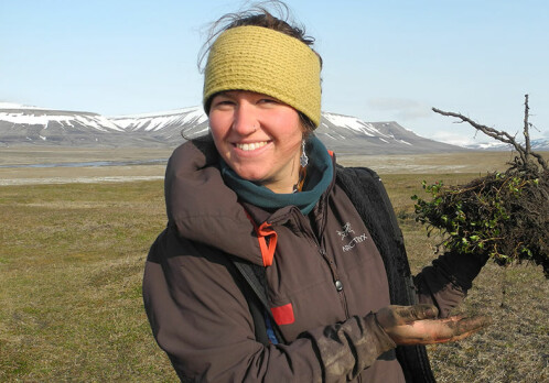 A tiny arctic shrub reveals secrets of plant growth on Svalbard