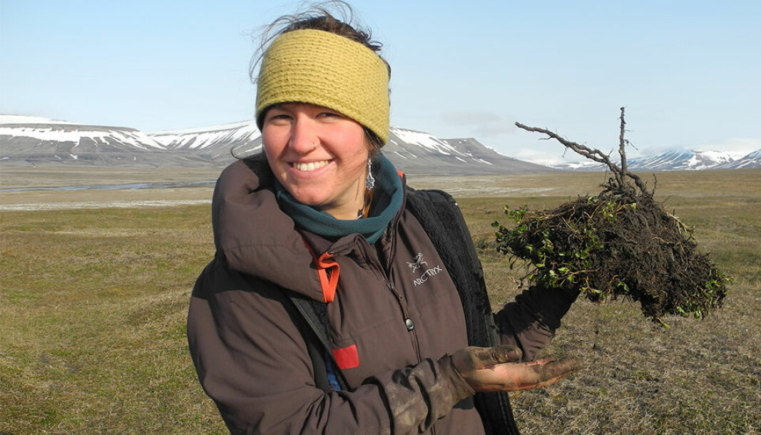 Morgan Bender (pictured) helped Mathilde Le Moullec excavate polar willows during the summer of 2015 on Svalbard. The little arctic shrub that is an important component of the diet of Svalbard reindeer.