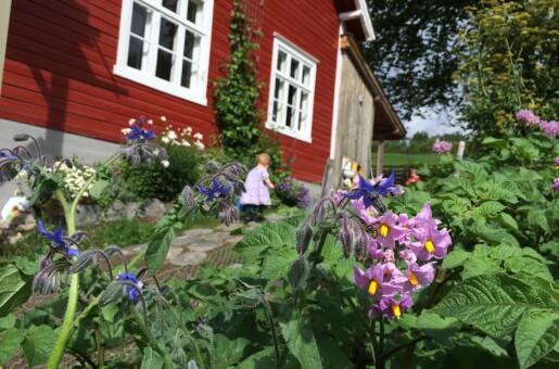 Redd verda i hagen: Skap ein oase for deg sjølv og dei små