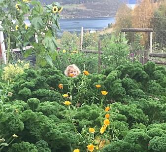 Hagen kan vera ein god stad å vera for mange småkryp.