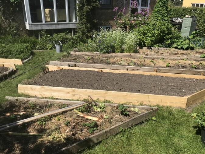 I forhagen dyrker Per Gundersen grønnsaker.
