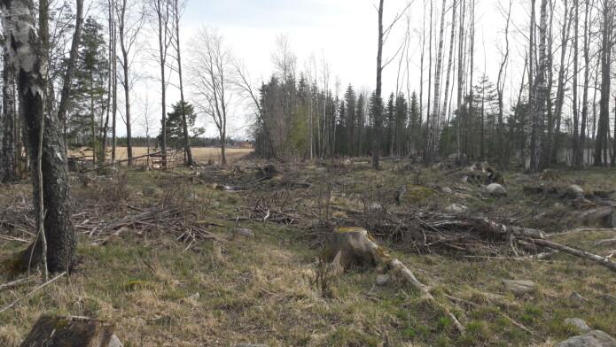 Fjerning av trær og stubber kan øke risikoen for erosjon.