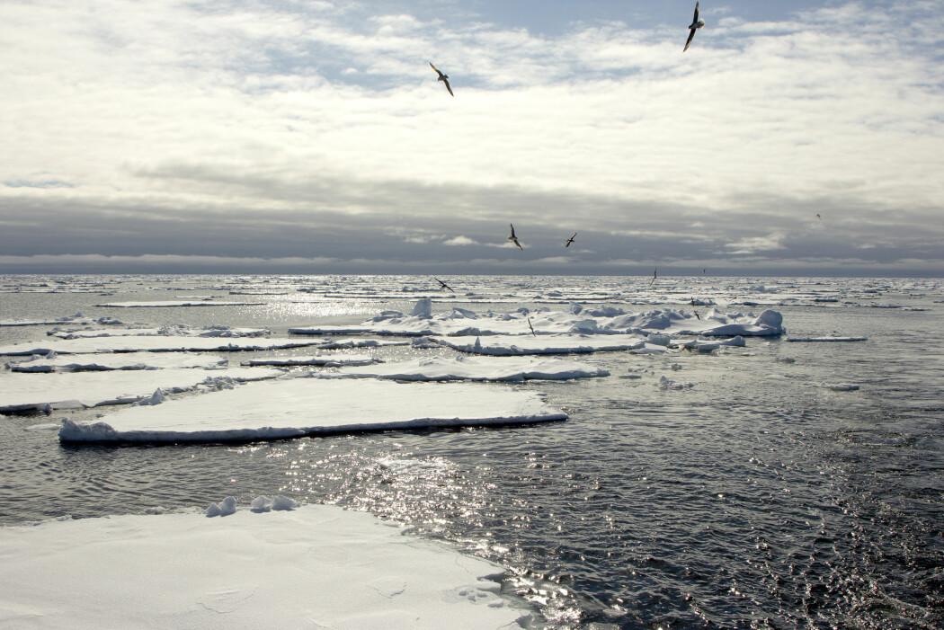 For fartøy som ferdes i polare havstrøk er det kritisk å ha kontroll på utbredelsen av sjøisen.