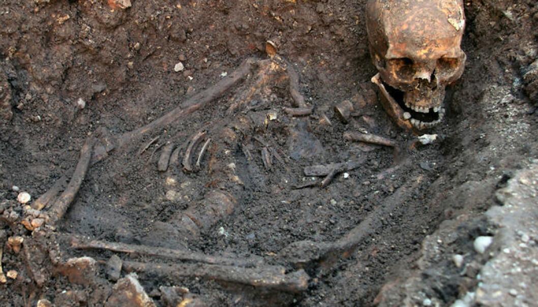 Levningen etter kong Richard III av England. Kongen ble begravd i Leichester i august 1485. University of Leicester