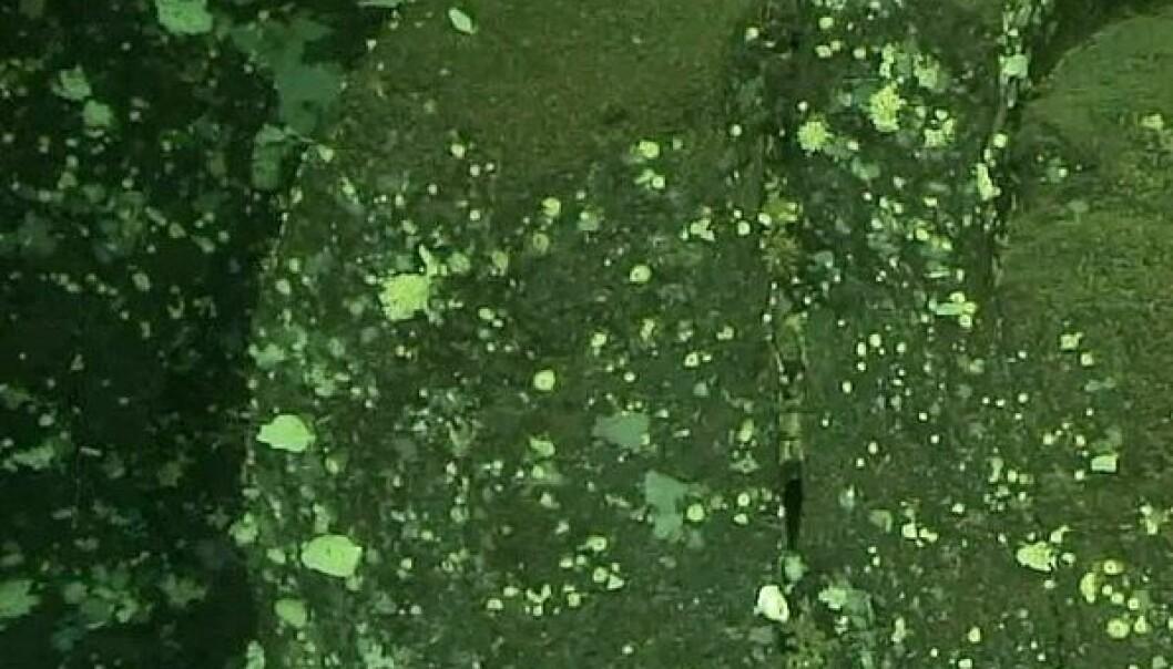 Søylene har en tykkelse på omtrent 100 meter, og formasjonen er trolig omtrent 100 meter høy. Sandstå Nils Rune