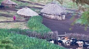 Dyrene i Serengeti hardt presset
