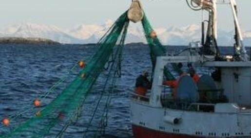 Kystflåten prioriterer torsk