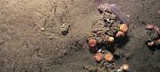 Ukjent undervannsparadis rundt gassutslipp i Arktis