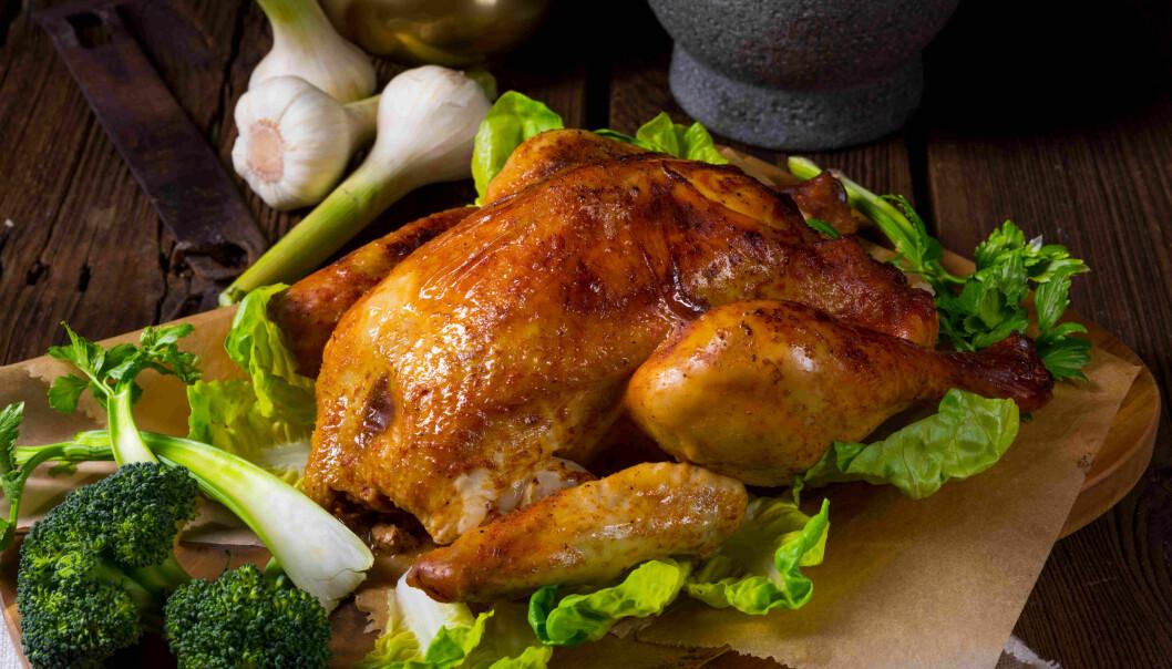 Forskere satte sykdomsfremkallende bakterier inn i kylling og stekte den. Først ved 70°C var alle de skumle bakteriene døde.