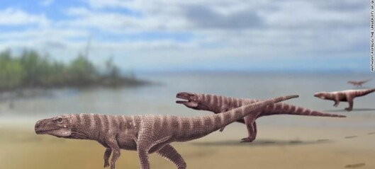 Forskere tror det fantes krokodiller som gikk på to bein
