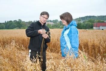Forskerne Oleif Elen og Sonja Klemsdal ved Bioforsk Plantehelse mener de nå har god nok hurtigstest for av avsløre toksinene til T-2 og HT-2 på samme måte som DON. (Foto: Erling Fløistad)