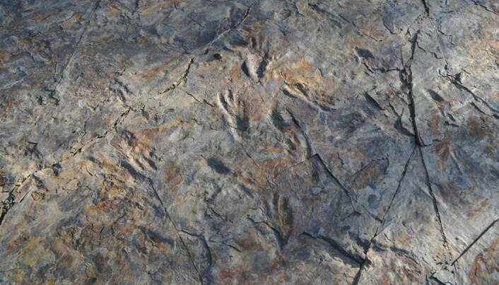 Forskere tror disse sporene ble laget av flere tobeinte krokodiller.