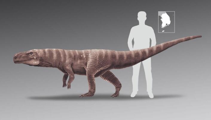 Omtrent så stor var krokodillen sammenlignet med et menneske.