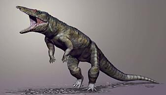 Forskere har tidligere funnet en slektning av krokodillene som levde for 231 millioner år siden. Også den gikk trolig på to bein.